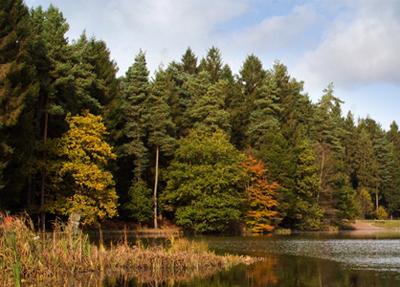 «Lidar Mapping» monitoriza la propagación de las enfermedades de los árboles
