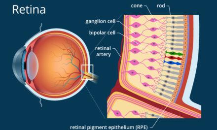 Fotorreceptores artificiales: matrices de nanocables como dispositivos protésicos subretinales.